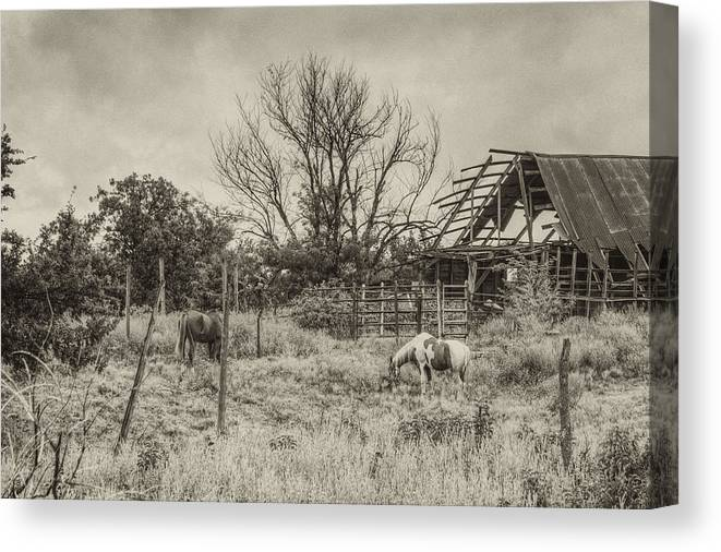Paint Canvas Print featuring the photograph Horses And Barn by Floyd Morgan Jr