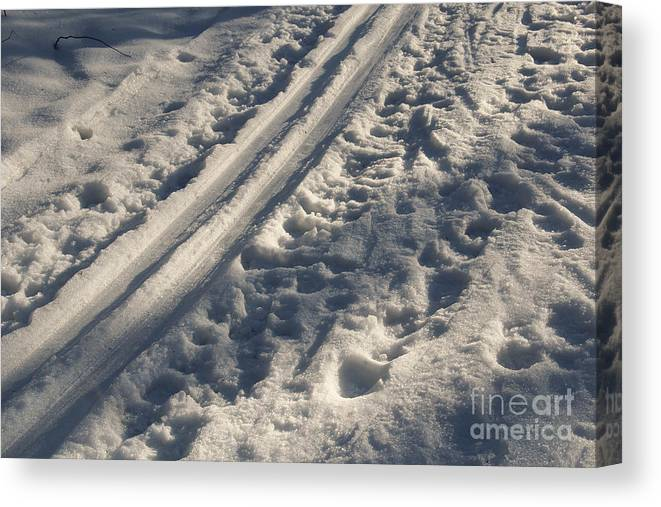 Ski Canvas Print featuring the photograph Ski Track In Sunlight by Kerstin Ivarsson
