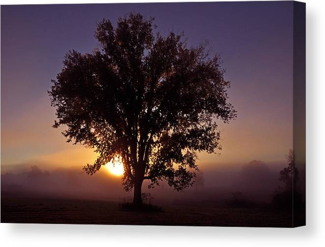 Tree Canvas Print featuring the photograph Tree by Patrick Friery