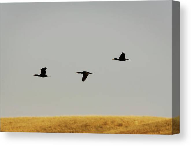 Alberta Canvas Print featuring the photograph Various Birds In A Rural Wetland Area by Todd Korol