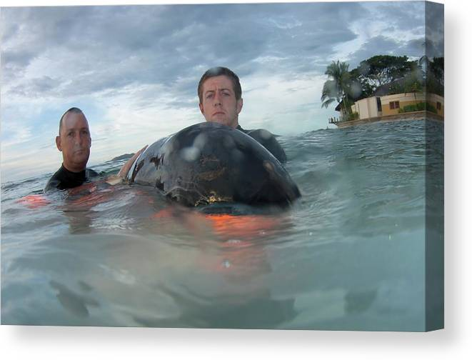 Borneo Canvas Print featuring the photograph Volunteer With Stranded Pygmy Killerwhale by Scubazoo