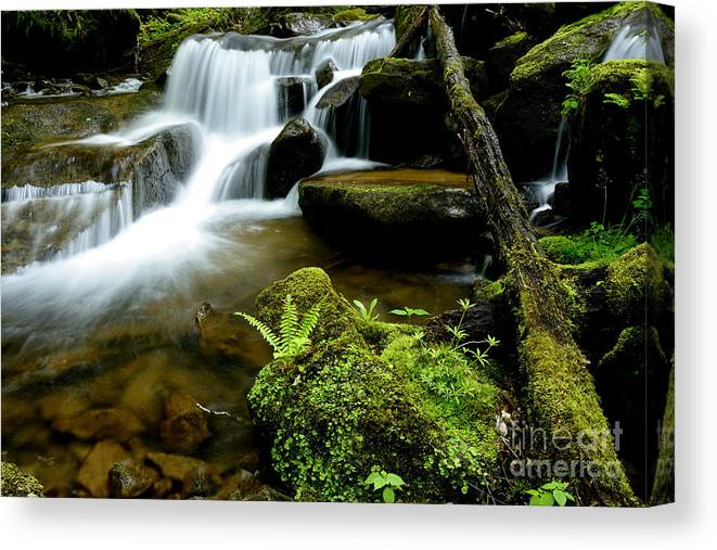 Spring Canvas Print featuring the photograph West Virginia Waterfall by Thomas R Fletcher