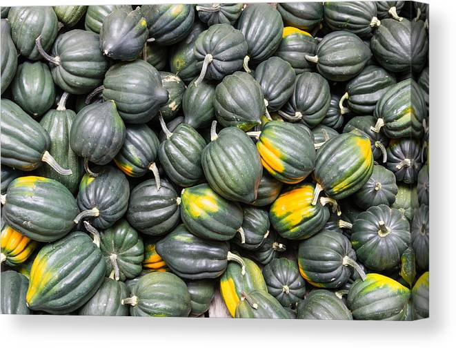 Agriculture Canvas Print featuring the photograph Acorn Squash by John Trax
