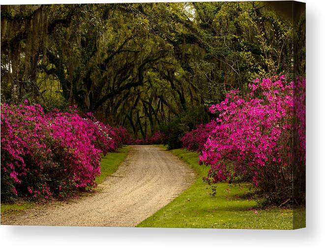 Afton Villa Canvas Print featuring the photograph Afton Villa Drive by Susie Hoffpauir