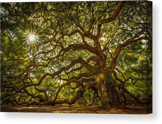 Oak Canvas Print featuring the photograph Angel Oak by Serge Skiba