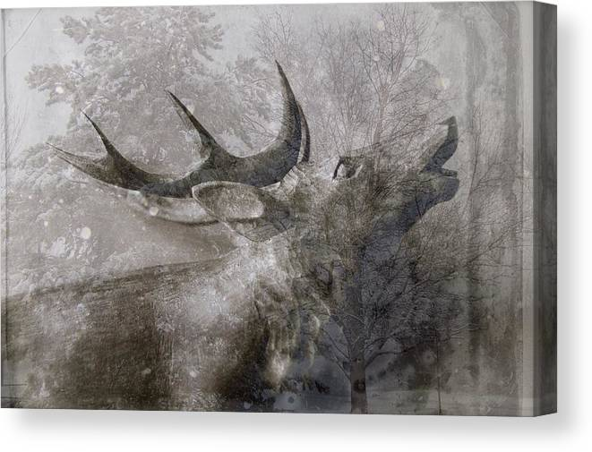 Christmas Card Canvas Print featuring the photograph Elk In Winter by Suzanne Powers