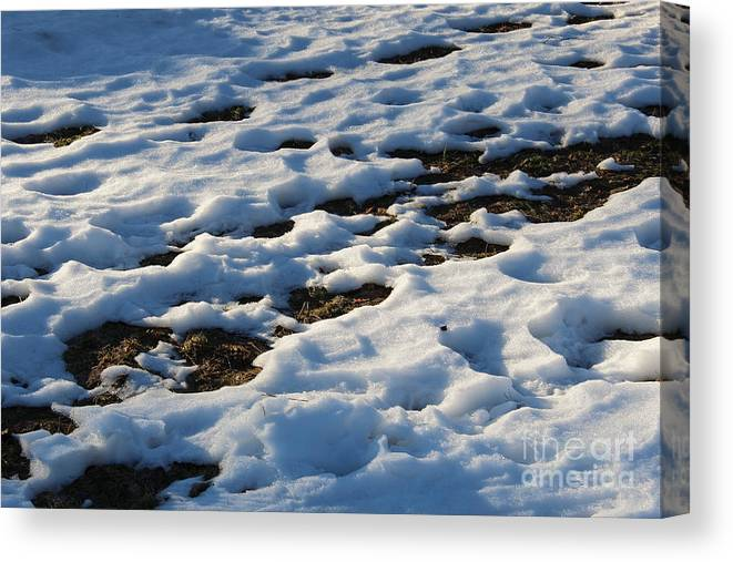 Melting Canvas Print featuring the photograph Melting Snow On Lawn by Kerstin Ivarsson