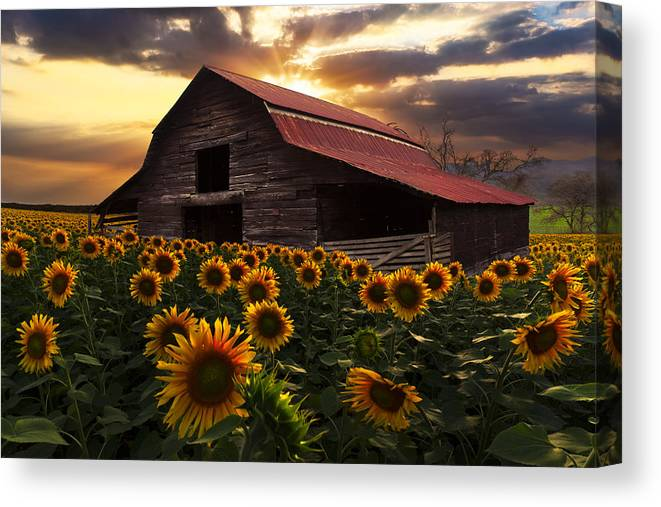 Appalachia Canvas Print featuring the photograph Sunflower Farm by Debra and Dave Vanderlaan