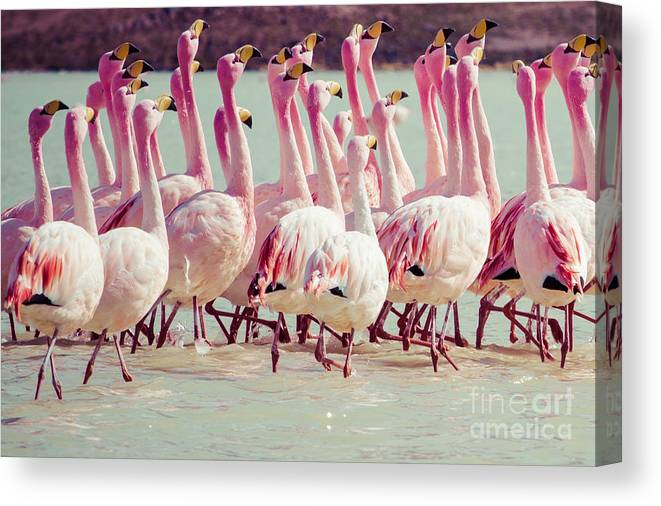 Flamingo Canvas Print featuring the photograph Flamingos On Lake In Andes by Mariusz Prusaczyk