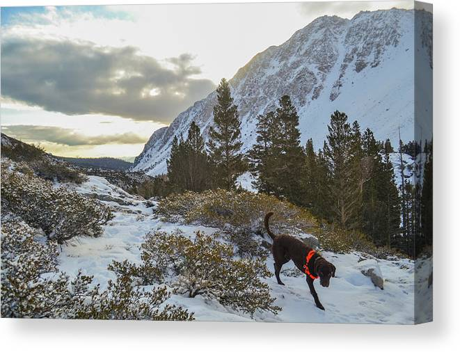 Usa Canvas Print featuring the photograph Snowshoeing To Temple Crag With Mans by Taylor Reilly