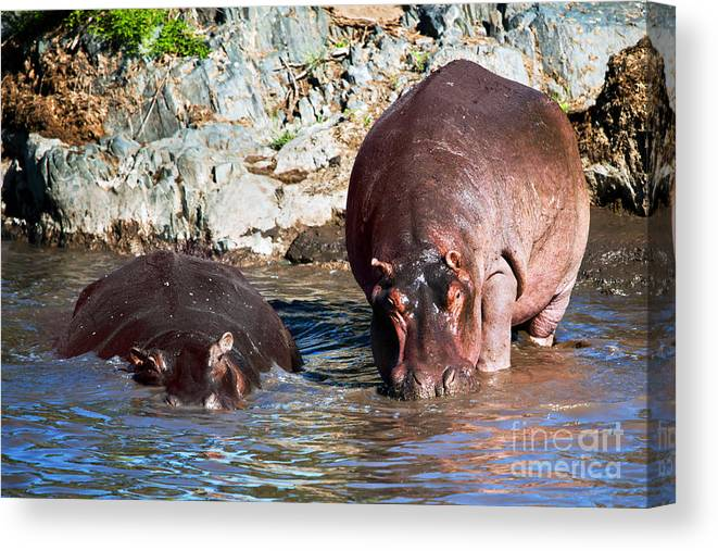 Hippo Canvas Print featuring the photograph Hippopotamus In River. Serengeti. Tanzania by Michal Bednarek