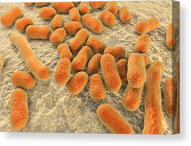 Acinetobacter Baumannii Canvas Print featuring the photograph Acinetobacter Baumannii Bacteria by Kateryna Kon/science Photo Library