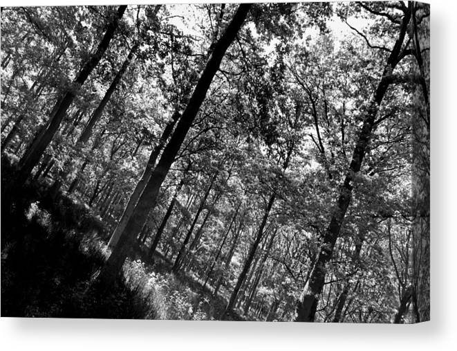Tree Canvas Print featuring the photograph The Forest by David Pyatt