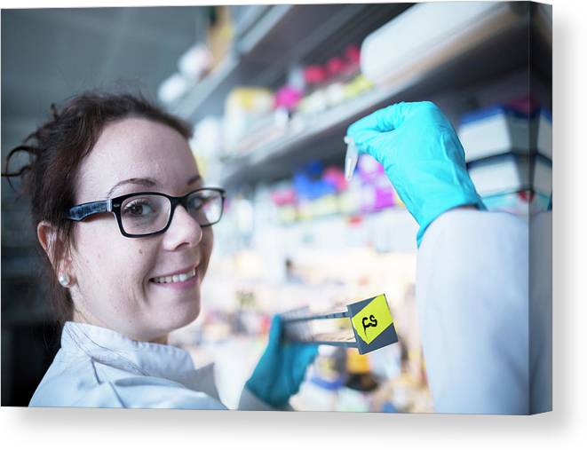 20 To 29 Years Canvas Print featuring the photograph Female Scientist In Laboratory by Sigrid Gombert/science Photo Library