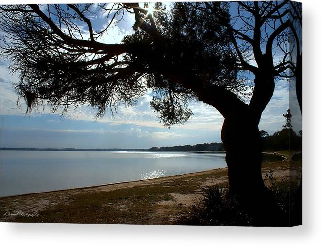 Park Canvas Print featuring the photograph A Park With Tranquil Moments by Debra Forand