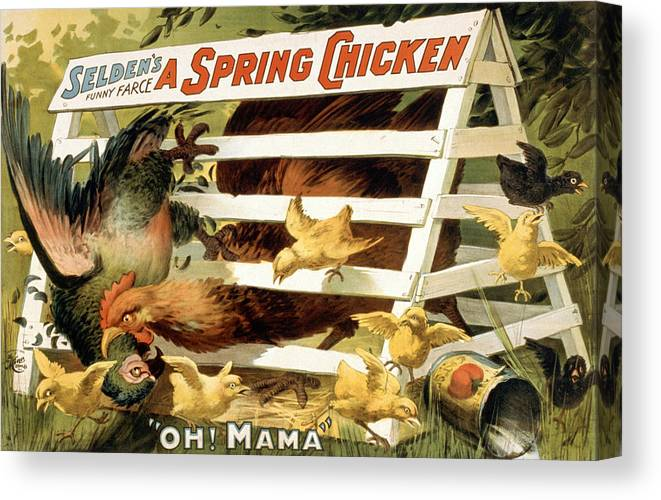 Entertainment Canvas Print featuring the drawing A Spring Chicken by Aged Pixel