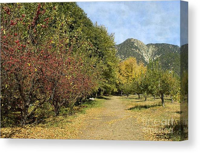 Path Canvas Print featuring the photograph A Walk Through The Orchard by Peggy Hughes