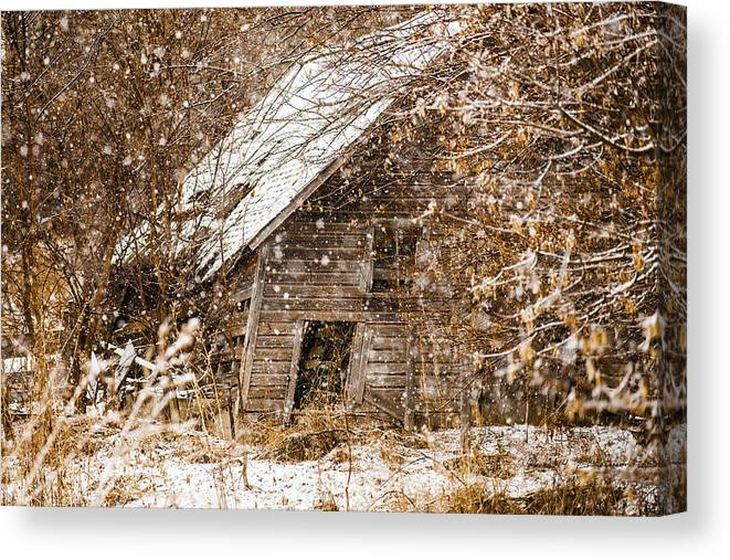 Barns Canvas Print featuring the photograph A Winter Shed by Edward Peterson