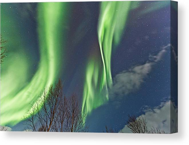 Norway Canvas Print featuring the photograph Above The Trees by Frank Olsen
