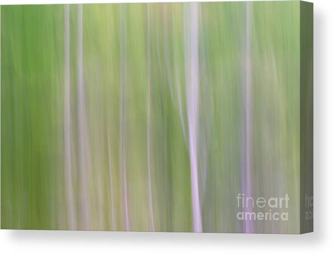 Abstract Canvas Print featuring the photograph Abstract Forest by Tamara Becker