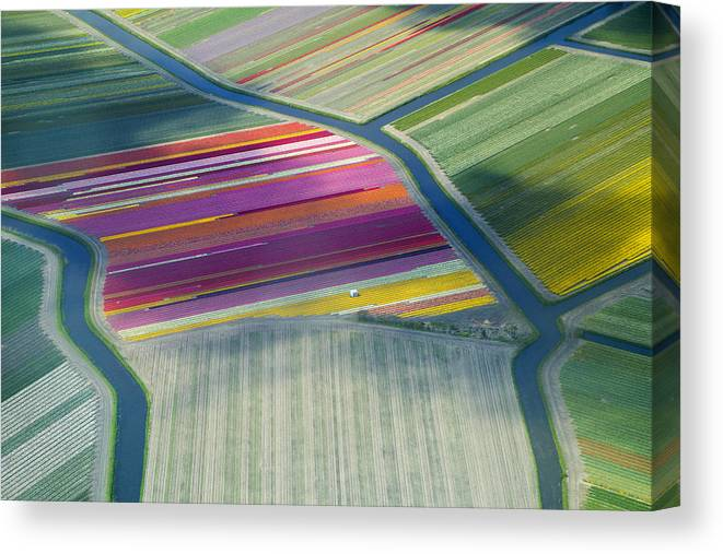 Curve Canvas Print featuring the photograph Aerial View Of Flower Fields In Spring by Frans Sellies
