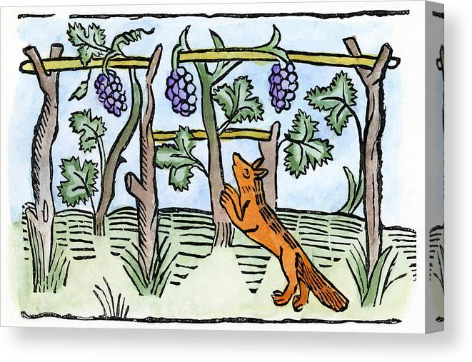 1484 Canvas Print featuring the drawing Aesop The Fox & The Grapes by Granger