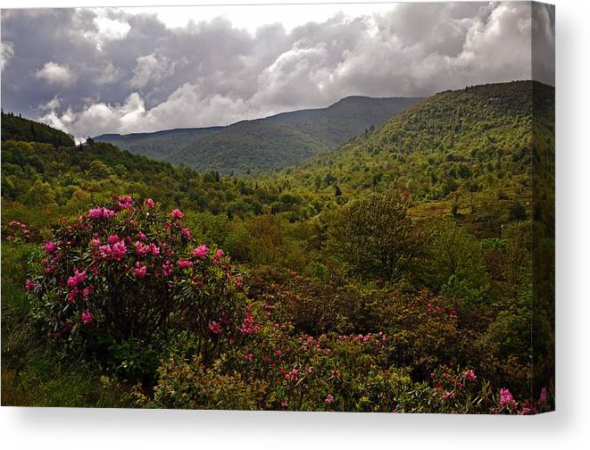 Flowers Canvas Print featuring the photograph After The Storm At Graveyard Fields by Dennis Butler
