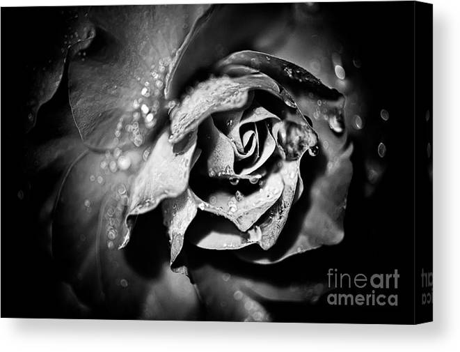 Beauty In Nature Canvas Print featuring the photograph After The Storm by Venetta Archer
