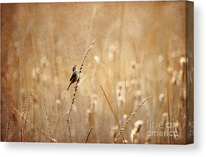 Bird Canvas Print featuring the photograph All Rejoicing by Lois Bryan