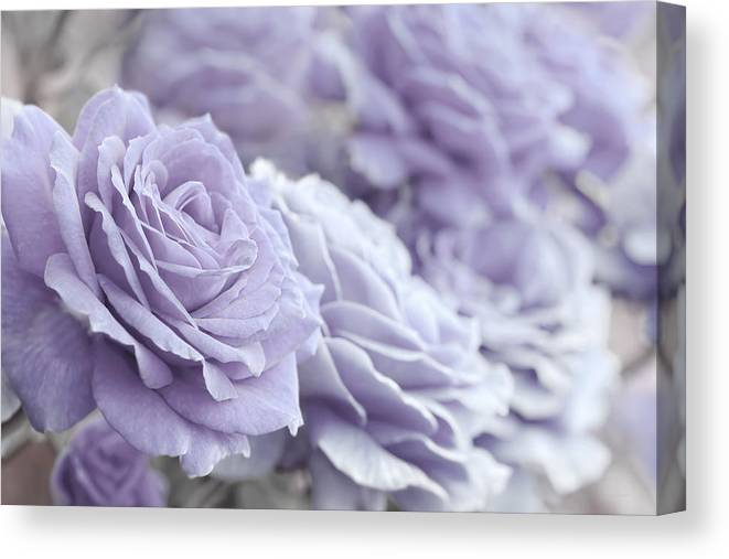 Rose Canvas Print featuring the photograph All The Lavender Roses by Jennie Marie Schell