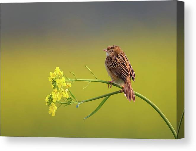 Bird Canvas Print featuring the photograph Alone by Himadri