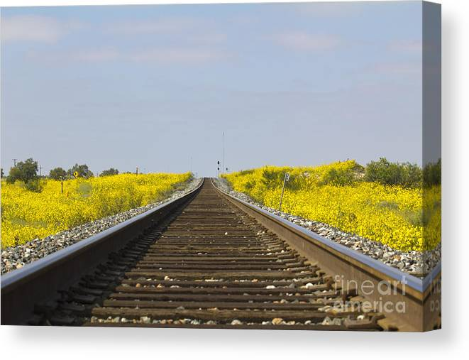 Train Canvas Print featuring the photograph Along The Tracks by Alycia Christine