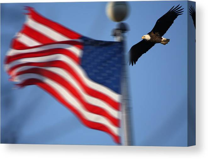 Bald Eagle Canvas Print featuring the photograph America Soaring by Coby Cooper