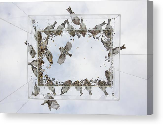 Alaska Canvas Print featuring the photograph Ants Eye View Of A Bird Feeder by Tim Grams