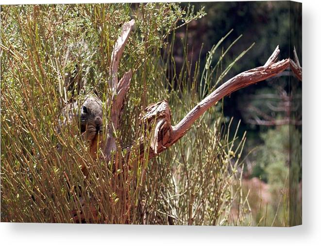 Grand Canyon Canvas Print featuring the photograph Are You Looking At Me by Sandy Molinaro