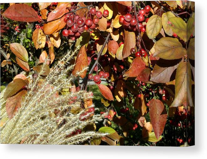 Autumn Canvas Print featuring the photograph Autumn Crabapples And Tall Grass by Gene Walls