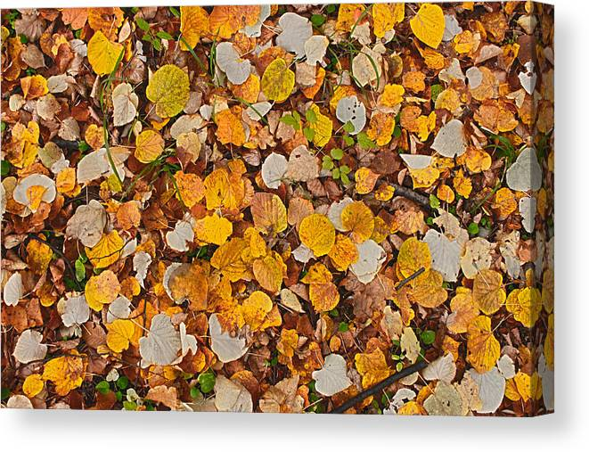 Autumn Canvas Print featuring the photograph Autumn IIi by Irimia Alex - Adrian
