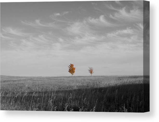 Unique Canvas Print featuring the photograph Autumn Prairie Trees by Dylan Punke