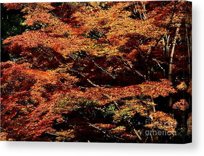 Nature Canvas Print featuring the digital art Autumn Solarisation 1 by Rudi Prott