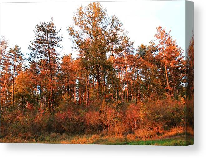 Landscape Canvas Print featuring the photograph Lighted By Sunset 1 by Ciprian Saran
