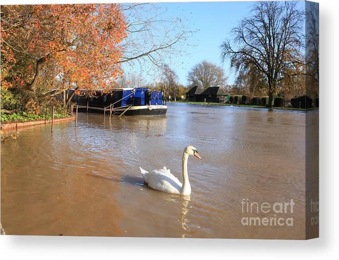 Swan Canvas Print featuring the photograph Autumn Swan by Paul Felix