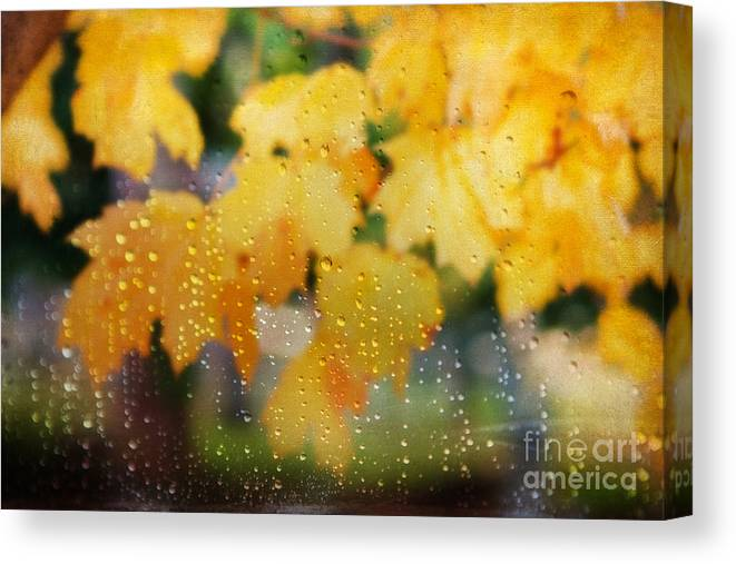 Nature Canvas Print featuring the photograph Autumns Tears by Darren Fisher