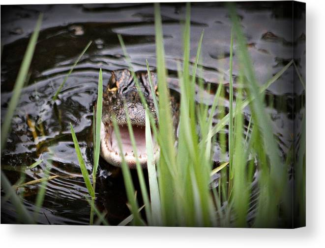 Canvas Print featuring the photograph Baby by Stephane Hathorn