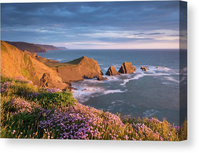 Scenics Canvas Print featuring the photograph Beautiful Sea Pink Wildflowers In by Adam Burton / Robertharding
