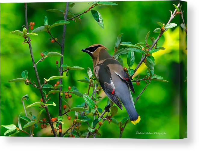 Northport Lighthouse West Trail Canvas Print featuring the photograph Berry Bounty Hunter by Sheen Watkins