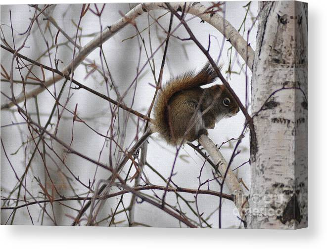 Diane Berry Canvas Print featuring the painting Birch Squirrel by Diane E Berry