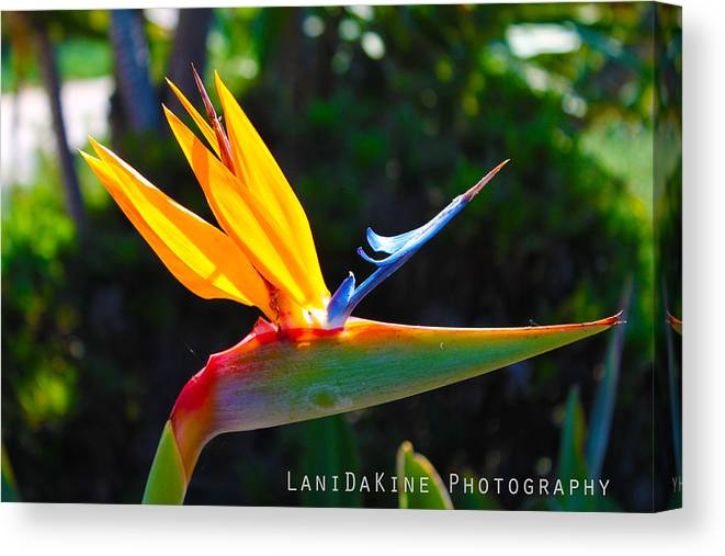 Yellow Canvas Print featuring the photograph Bird Of Paradise Plant by Ryan Rodriguez