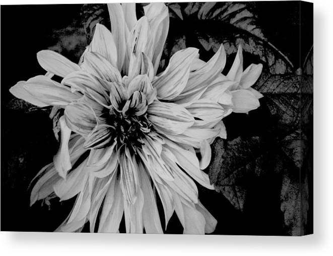 Black And White Canvas Print featuring the photograph Black And White Floal by Eddie Miller