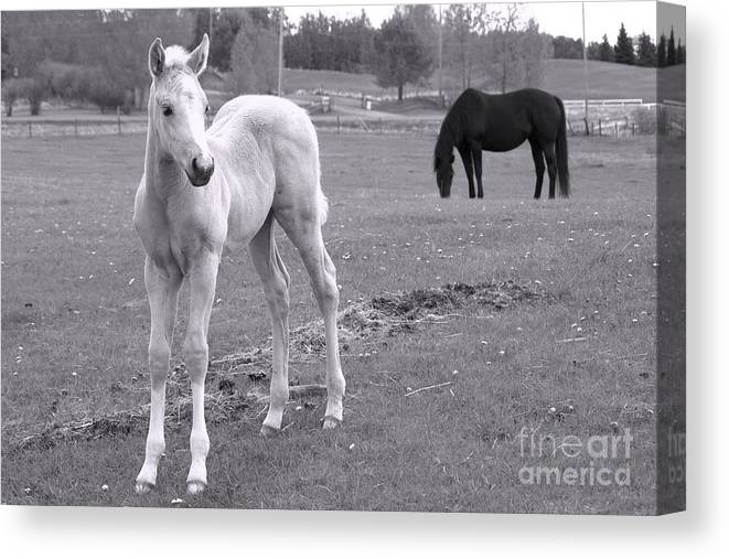 Western Canvas Print featuring the photograph Black And White In Black And White by Cheryl Hurtak
