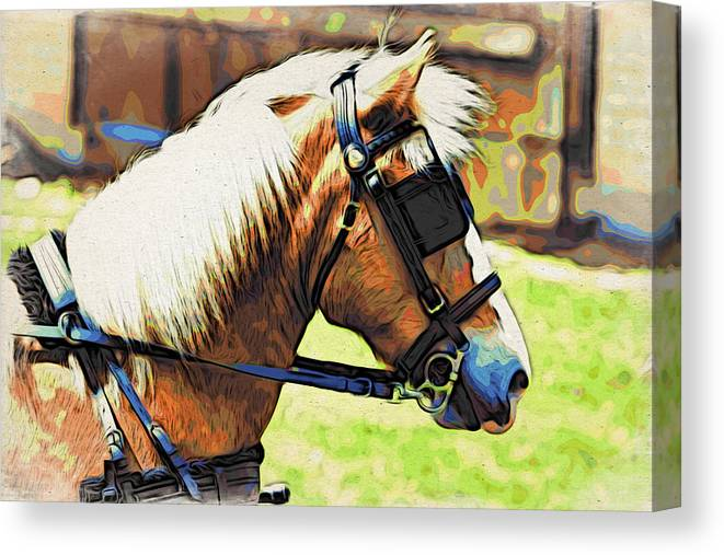 Horse In Blinders Canvas Print featuring the photograph Blinders by Alice Gipson